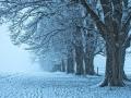 Steindlallee im winternebel Marcel(1).jpg